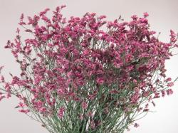 LIMONIUM HOT PINK DIAMOND ROSA